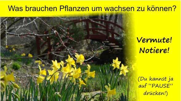 Gemütlich Was Braucht Eine Pflanze Arbeitsblatt Wachsen Bilder ...