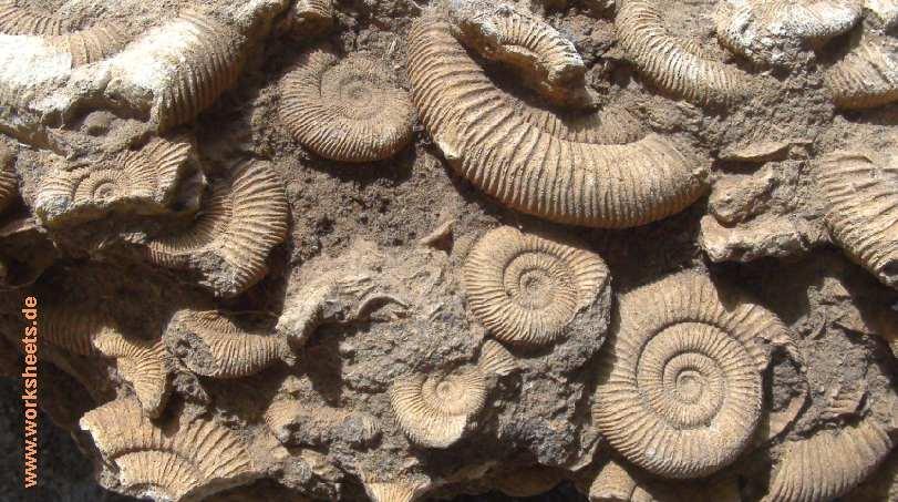 Wie entstehen Fossilien - Memory