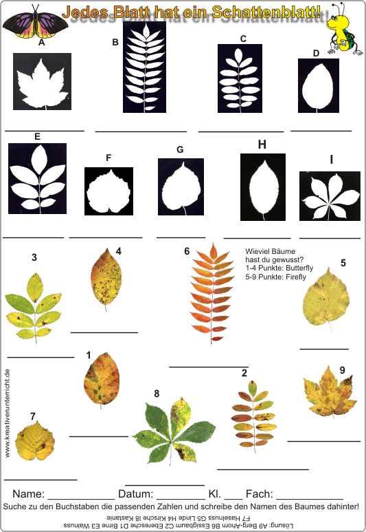 Herbstblätter bestimmen mit Schattenbild