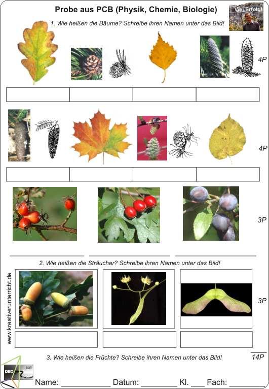 Stammbaum – Wikipedia