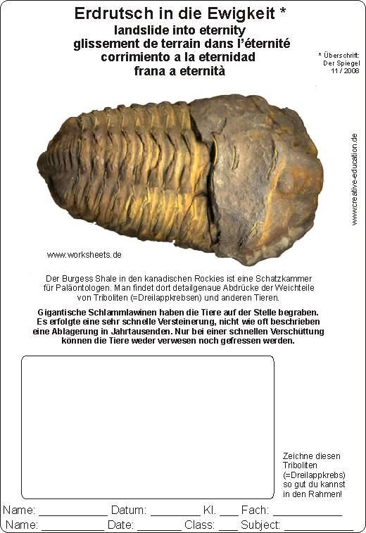 Wie Fossilien entstehen Arbeitsblatt