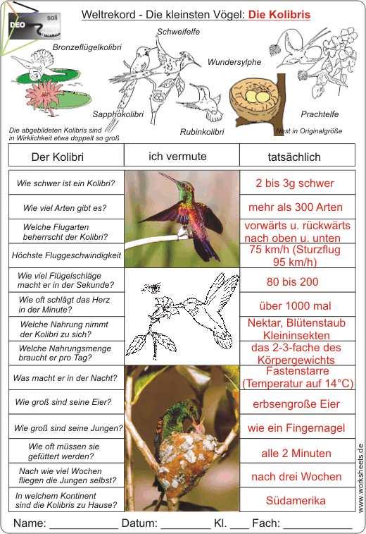 Arbeitsblatt Der Vogel : Kolibris die kleinsten vögel der welt